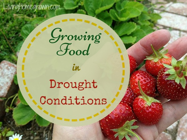 How to Grow Food in Drought Conditions - LivingHomegrown.com