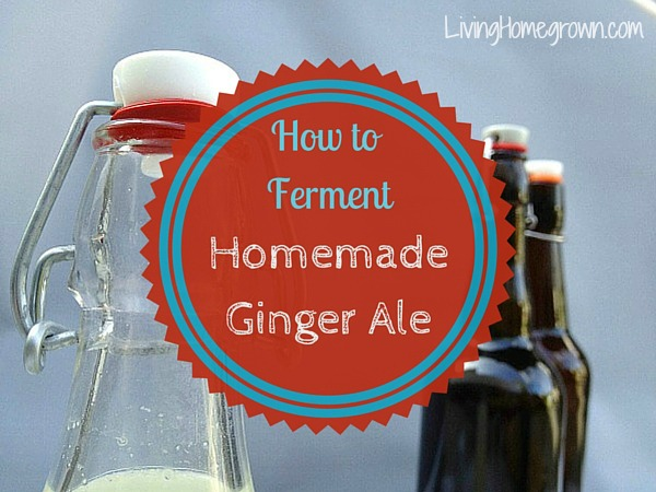 How to Ferment Homemade Ginger Ale - LivingHomegrown.com