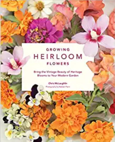 growing heirloom flowers - www.LivingHomegrown.com